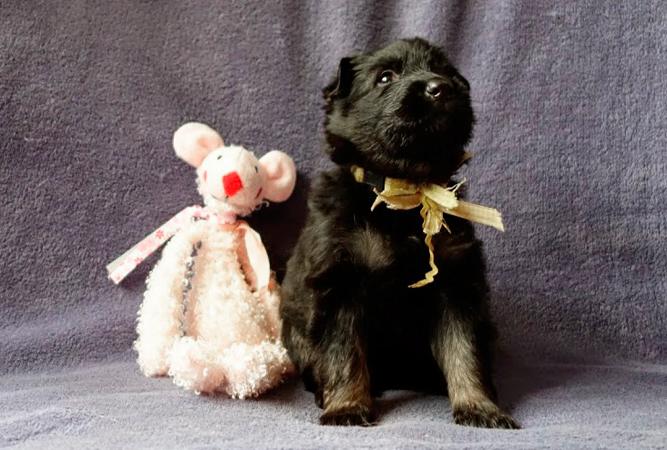 Foto van Jara als pup, ca. 6 weken oud, met een knuffeldier.