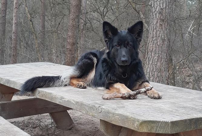 Foto van Jara die op een picknicktafel ligt in het bos bij Norg